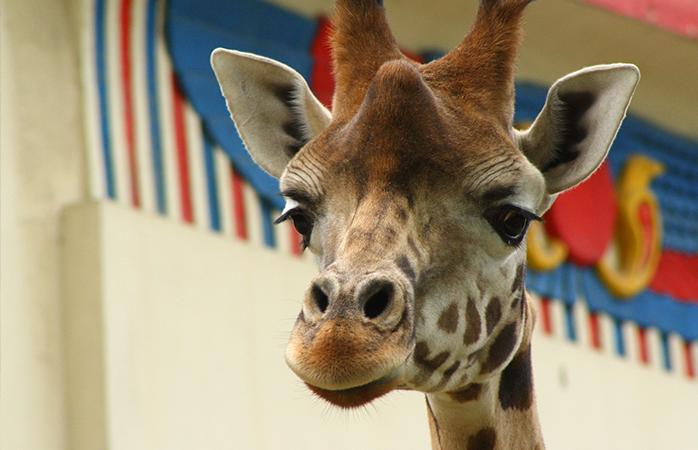 Bezoek tijdens je weekendje Antwerpen de Zoo: de oudste dierentuin ter wereld.